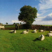 KLF chill out